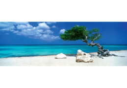 HEYE Panoramapuzzle - Alexander von Humboldt - Divi Divi Tree - 1000 Teile